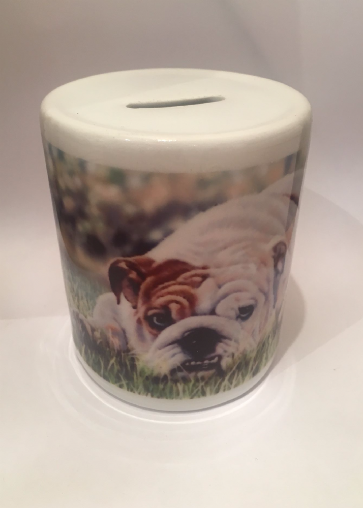 Bulldog Moneybox